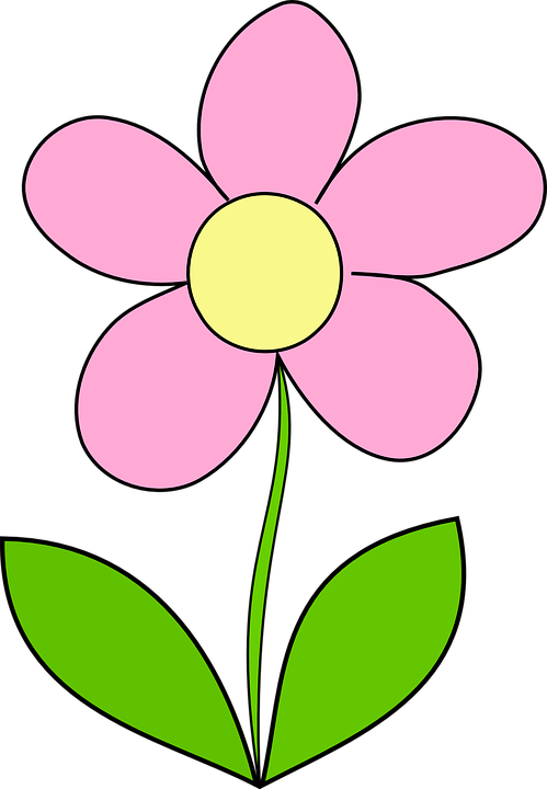 Free vector graphic: Flower, Daisy, Yellow, Pink, Spring.