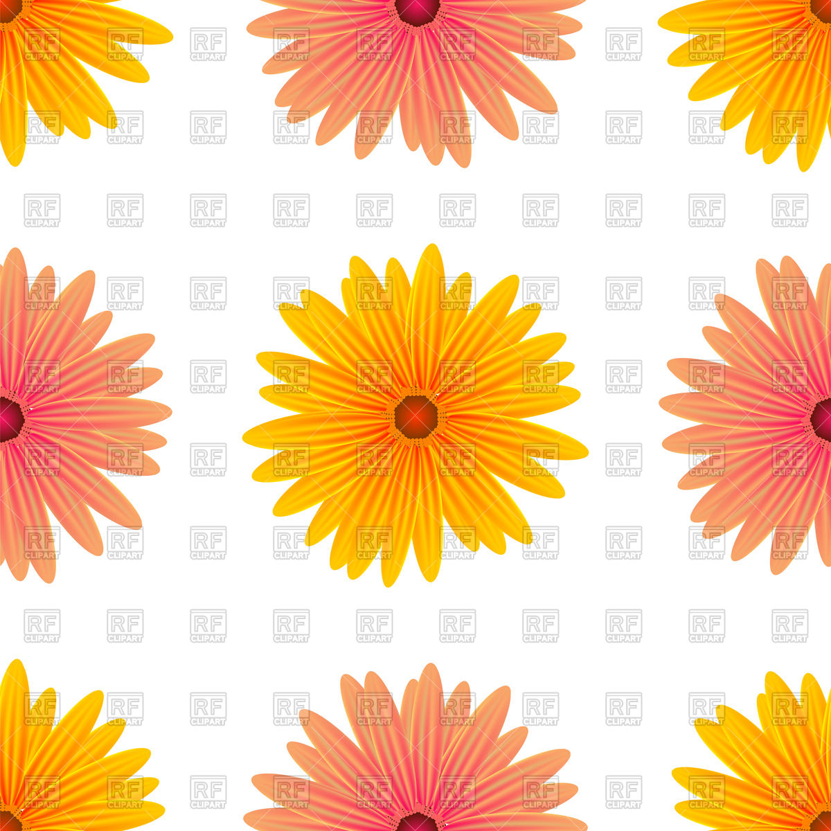 Spring pink and yellow flowers isolated on a white background.