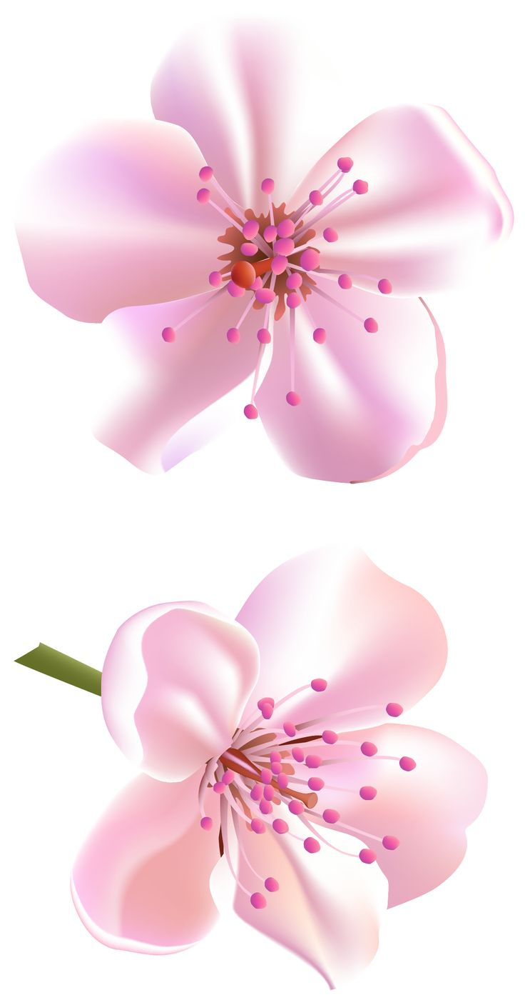 Spring Pink Tree Flowers PNG Clipart.