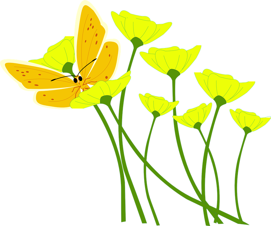 Free vector graphic: Flower, Poppy, Butterfly, Spring.