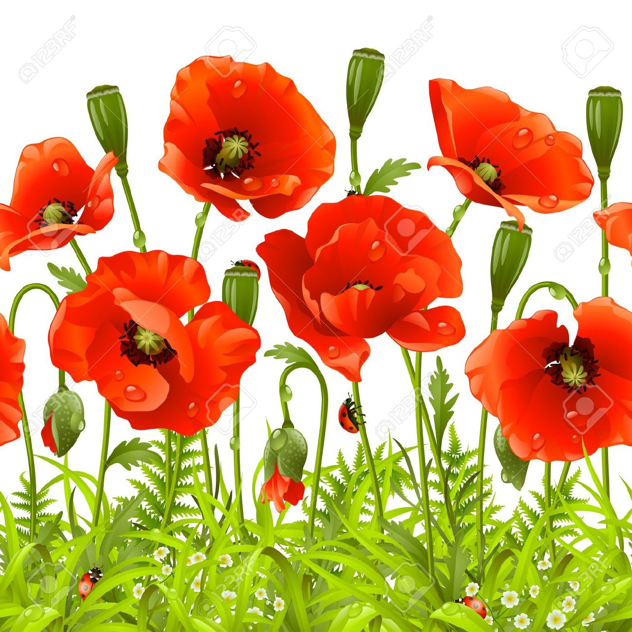 Poppy Flower Clip Art.