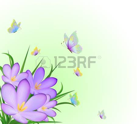 430 Saffron Crocus Stock Vector Illustration And Royalty Free.