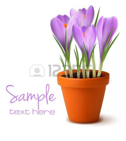 3,168 Saffron Stock Illustrations, Cliparts And Royalty Free.