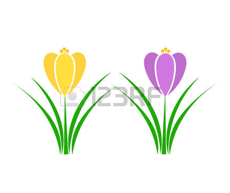 208 Saffron Yellow Stock Vector Illustration And Royalty Free.