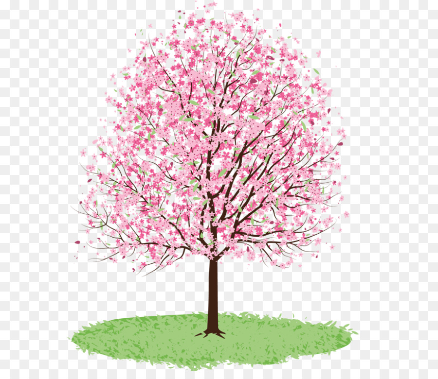 Cherry Blossom Tree Drawing png download.