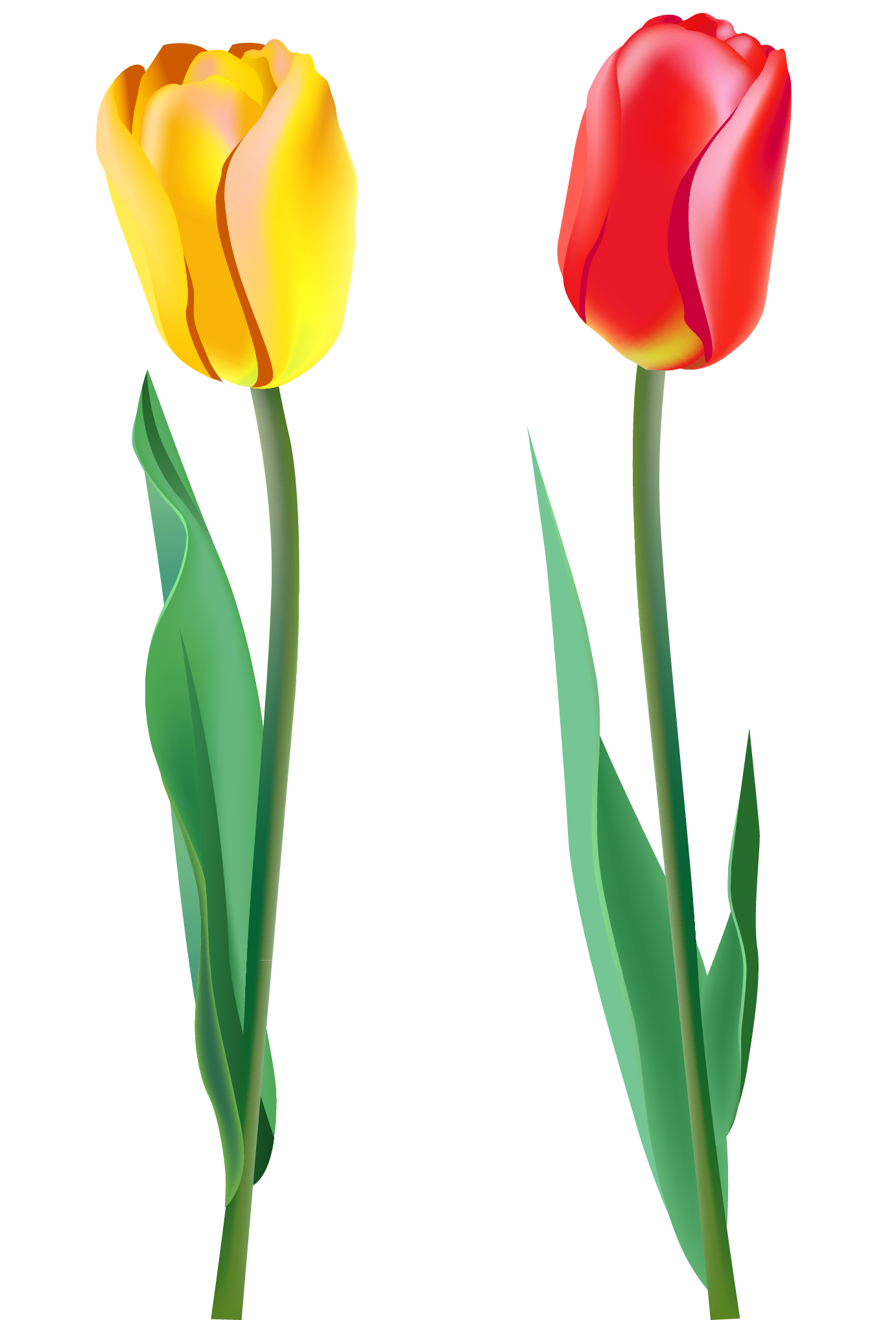 Spring Tulips PNG Clipart.