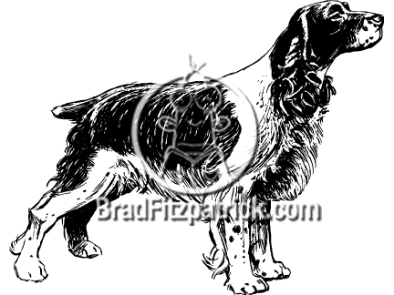 Black and White Springer Spaniel Clip Art.