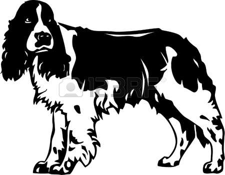 209 Springer Spaniel Stock Illustrations, Cliparts And Royalty.