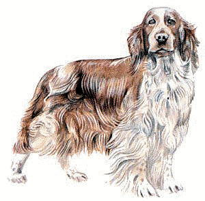 Free Dog Clipart, 1 page of Public Domain Clip Art.