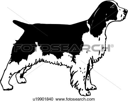 Clipart of , animal, breeds, canine, dog, english springer spaniel.