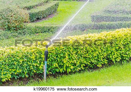 Stock Image of sprinkle water k19960175.