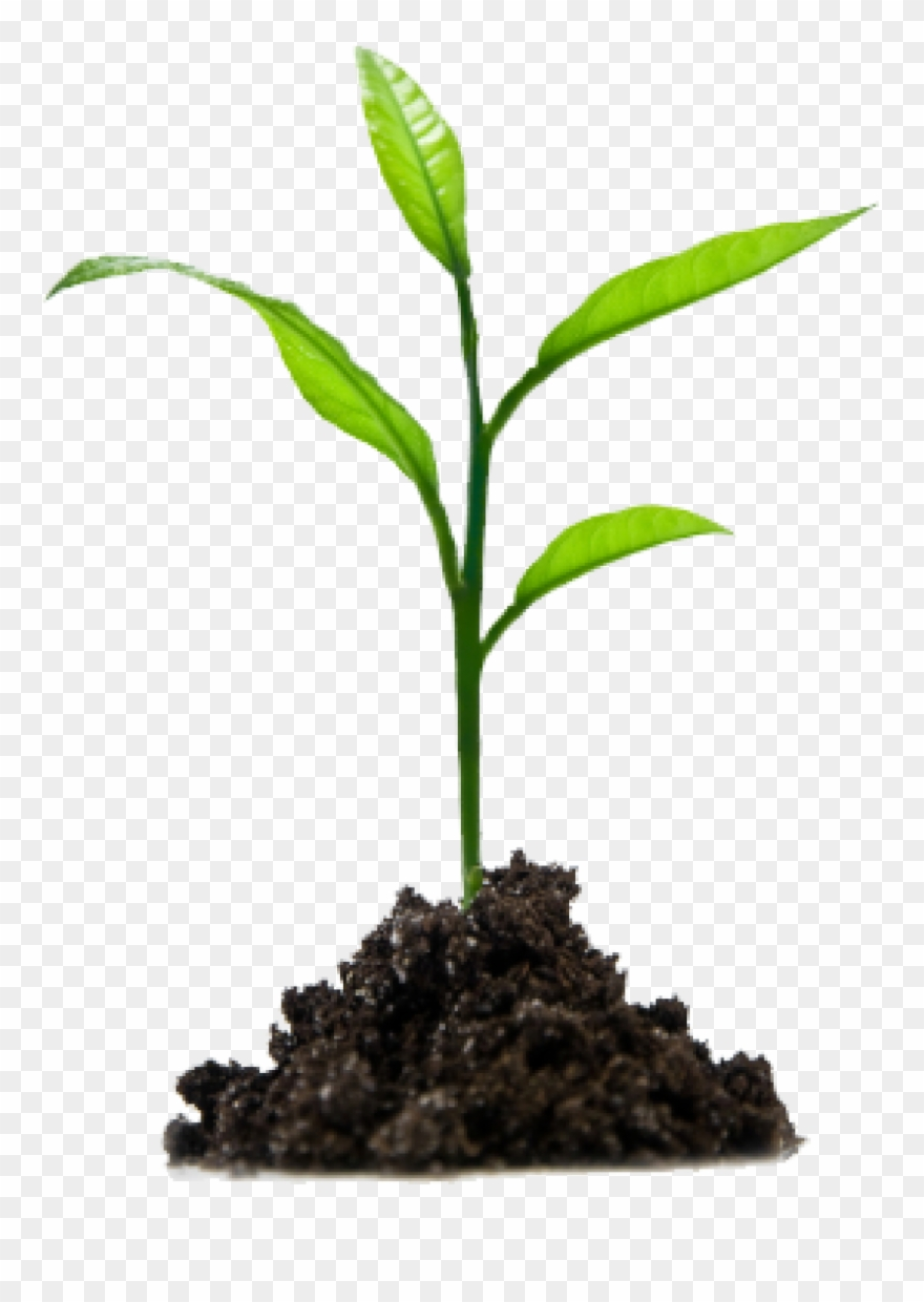 Crops Clipart Sprout.
