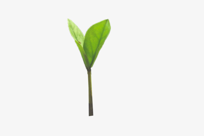 Tree Sprout Png & Free Tree Sprout.png Transparent Images.