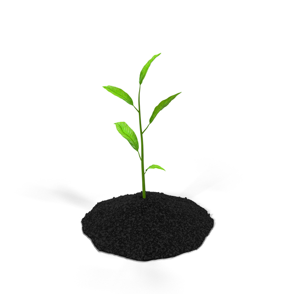 Plant Sprout PNG Images & PSDs for Download.