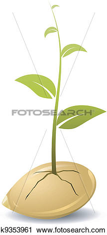 Clipart of Sprouted grains. vector k9353961.