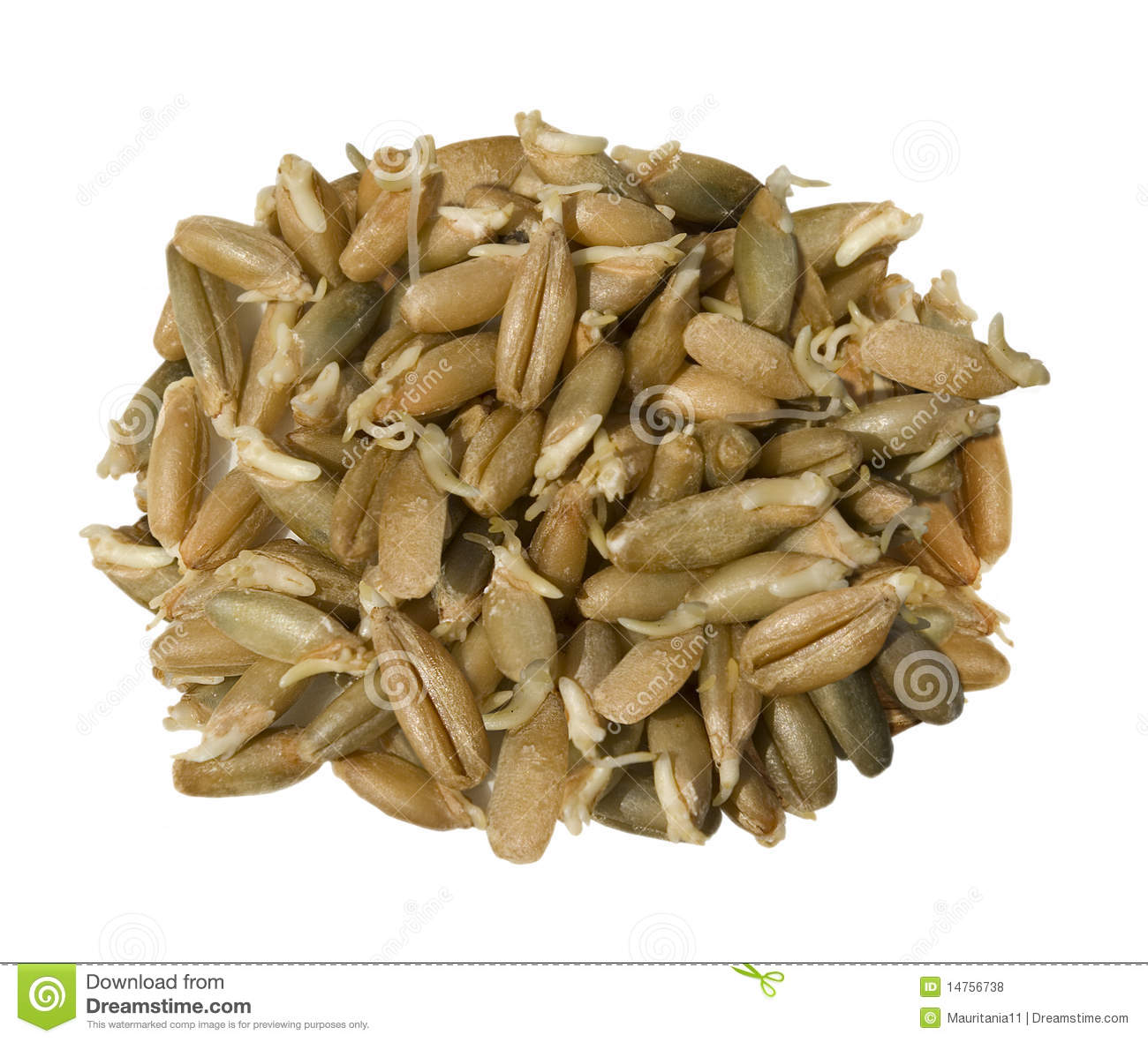 The Sprouted Grains Royalty Free Stock Photos.