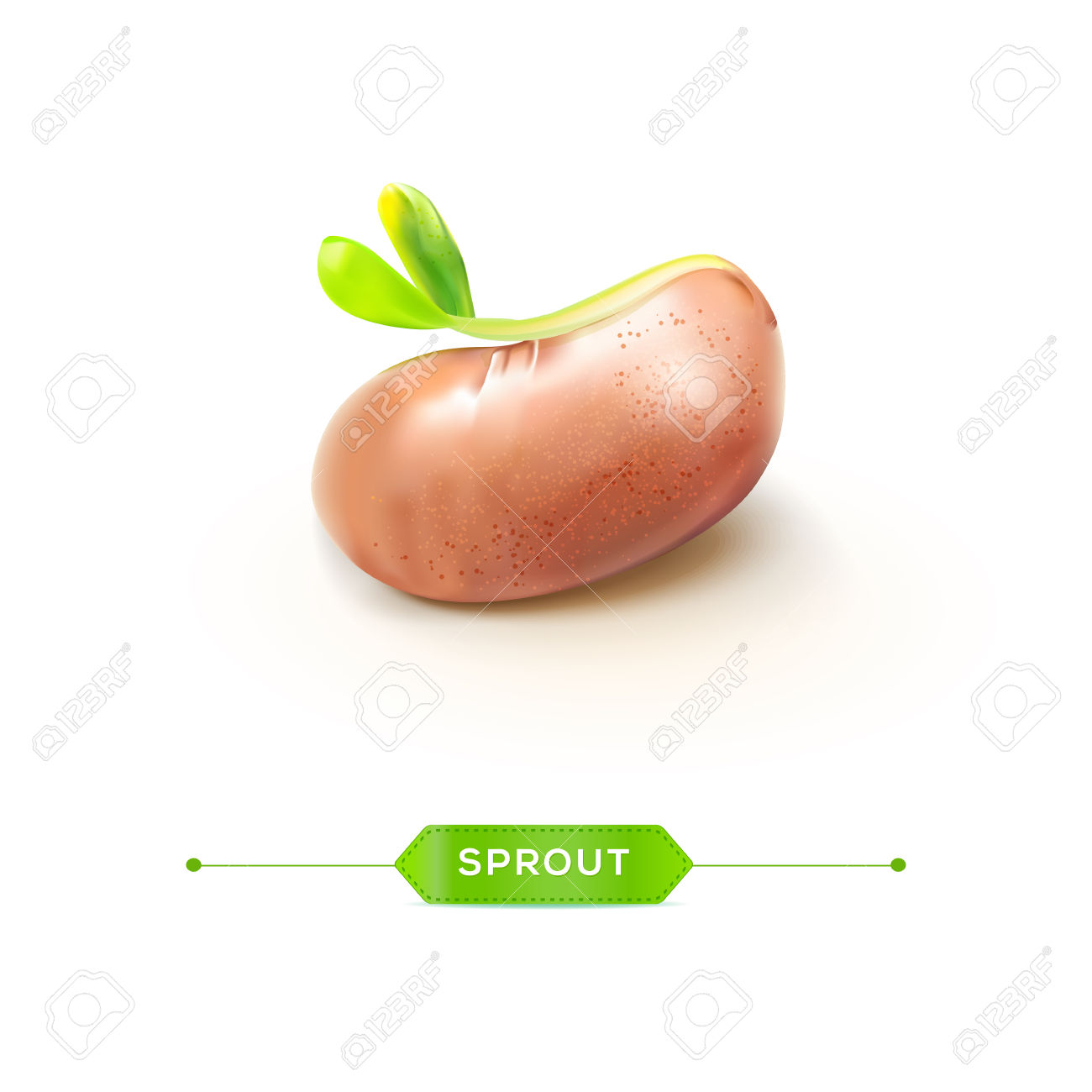 Sprouted Grains Realistic Bean With Young Sprout Vector.
