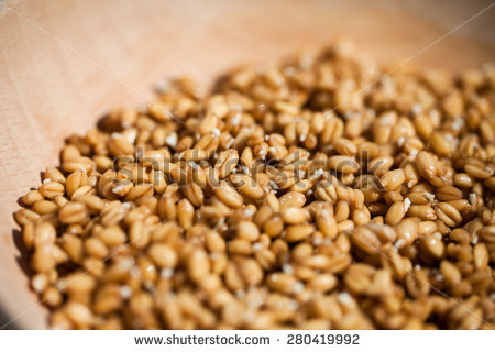 Sprouted Grain Stock Photos, Royalty.