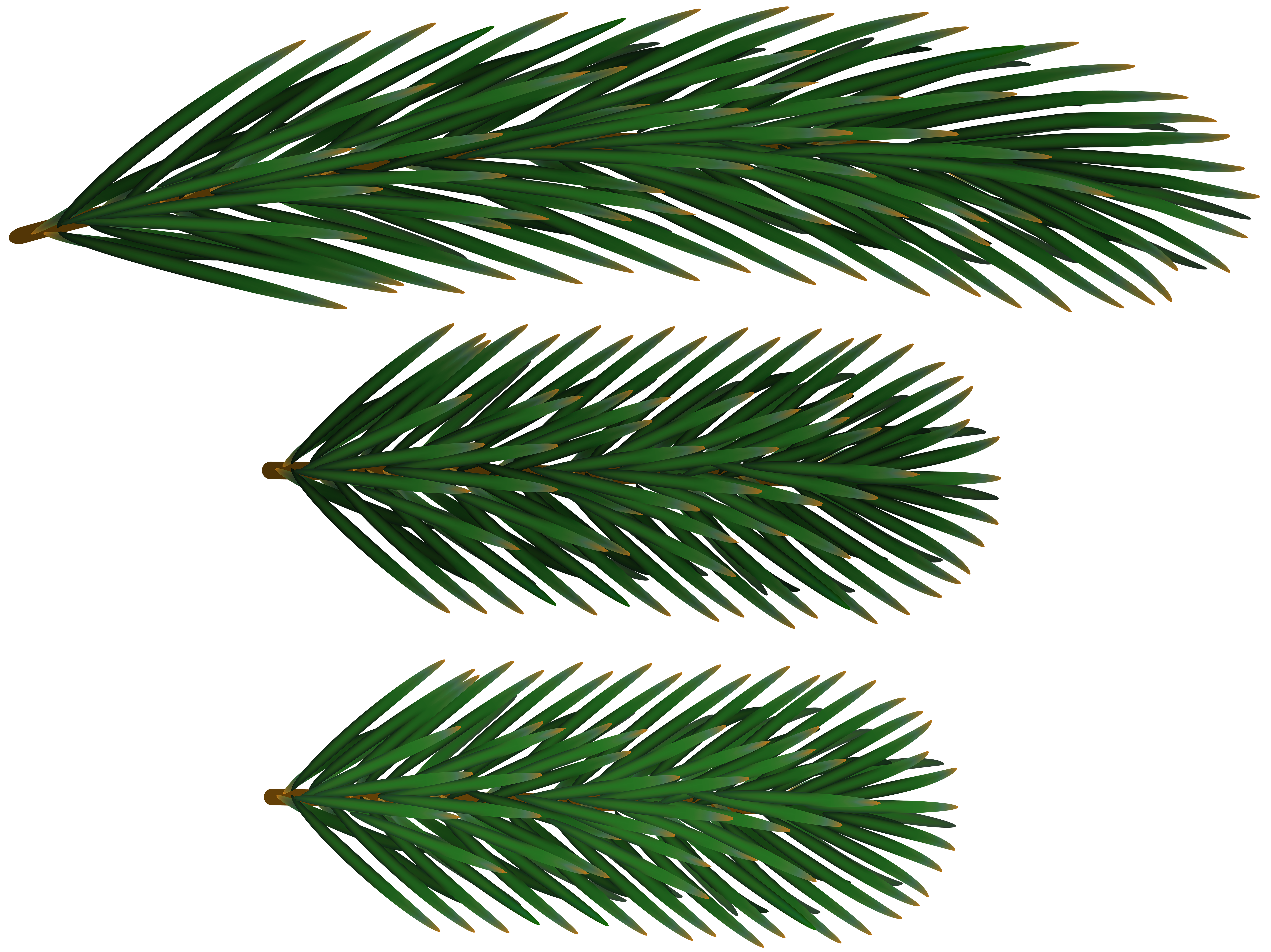 Pine Branches PNG Clip Art.