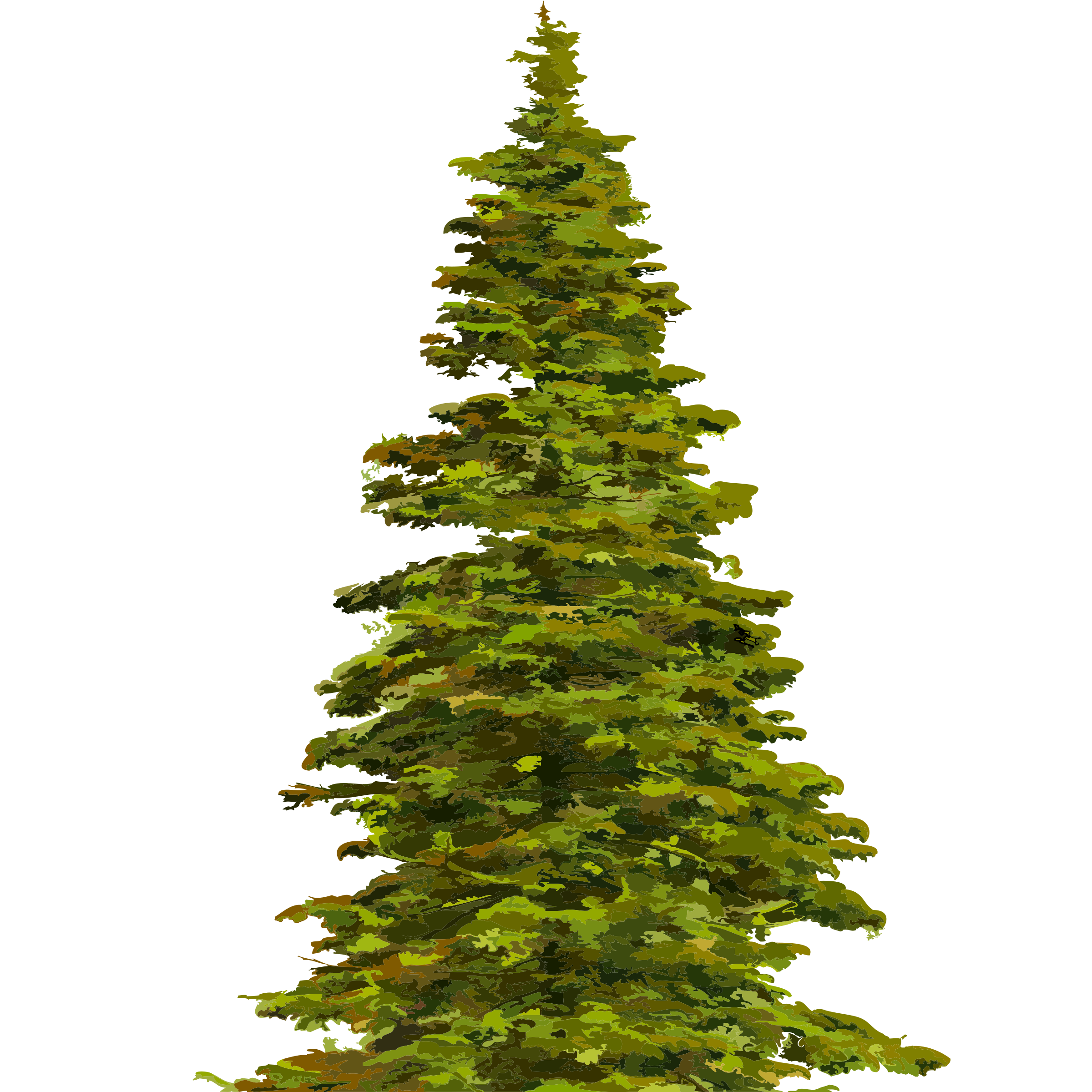 Spruce clipart.