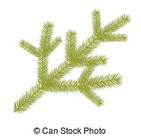 Spruce twig clipart #6