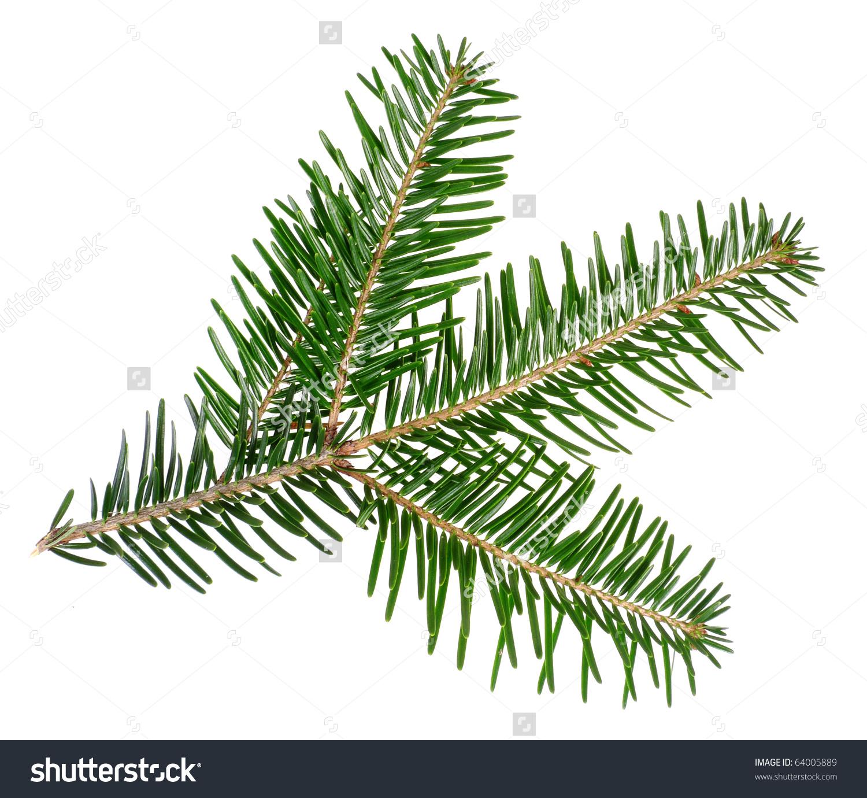 Spruce Twig Clip Art.