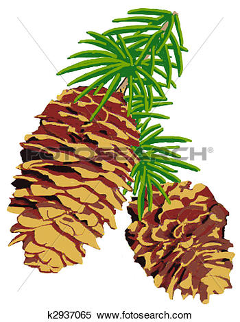 Stock Illustration of Engelmann Spruce k2937065.