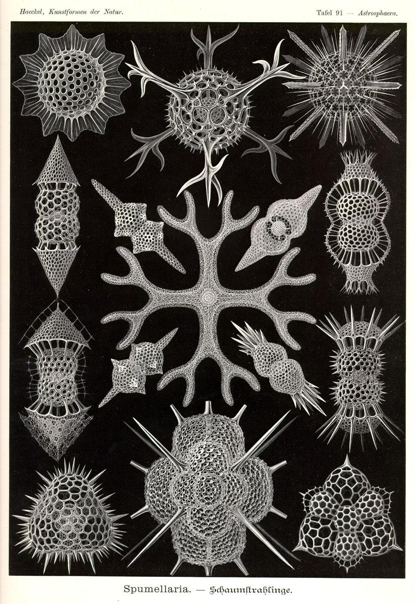 Spumellaria by Ernst Haeckel; Kunstformen der Natur, 1900.