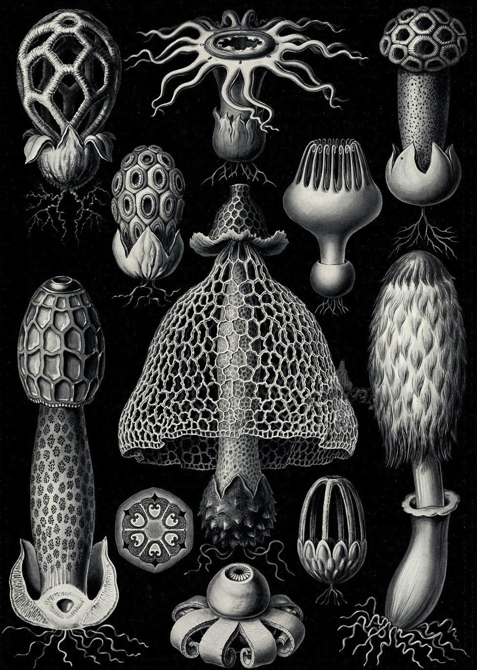 Ernst Haeckel. Hexacoralla, Ascomycetes, Lichenes, Phaeodaria.