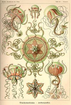 Ernst Haeckel. Spumellaria, Kunstformen der Natur (Art Forms in.
