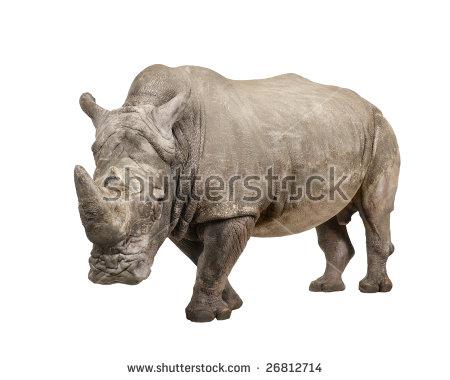 White Rhinoceros Stock Photos, Royalty.