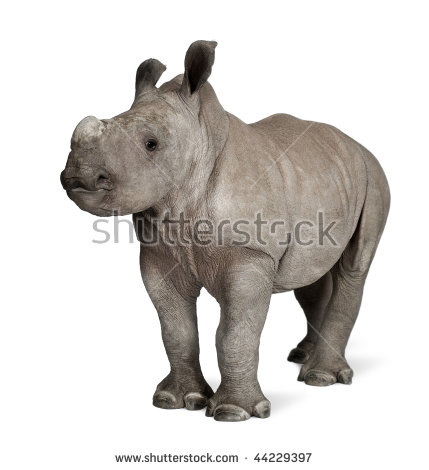 "baby Rhinoceros"" Stock Photos, Royalty."