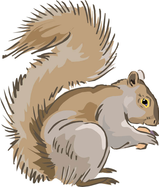 Free squirrel clipart 3.