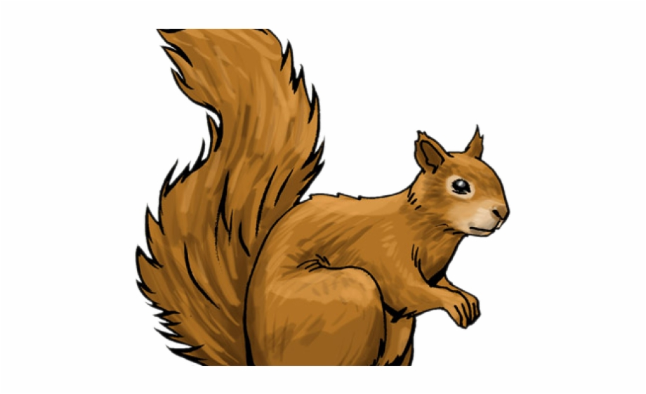 Red Squirrel Clipart Woodland.