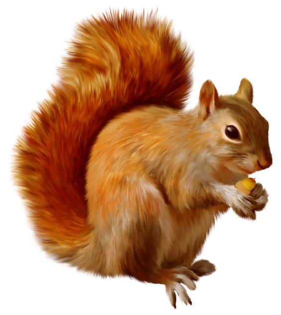 Squirrel Clipart & Squirrel Clip Art Images.