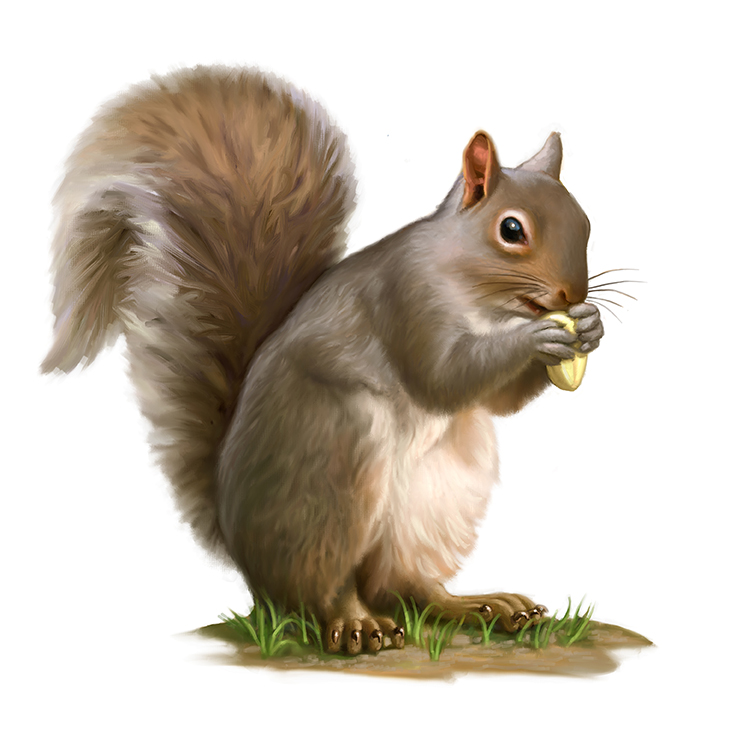 Squirrel clipart clipground for Graphics clipart