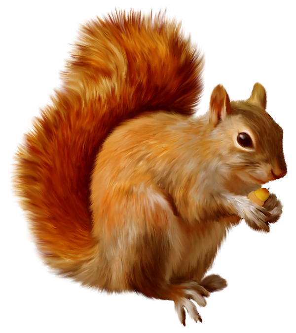 Free Squirrel Clipart.