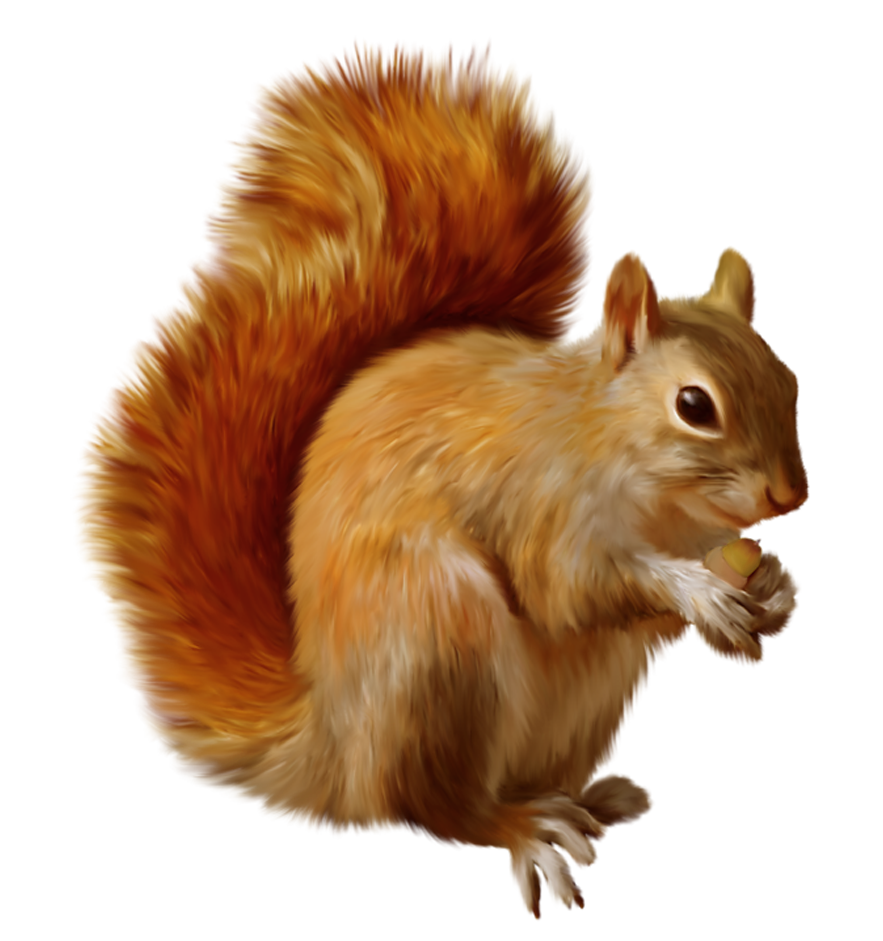 Squirrel PNG Clipart.