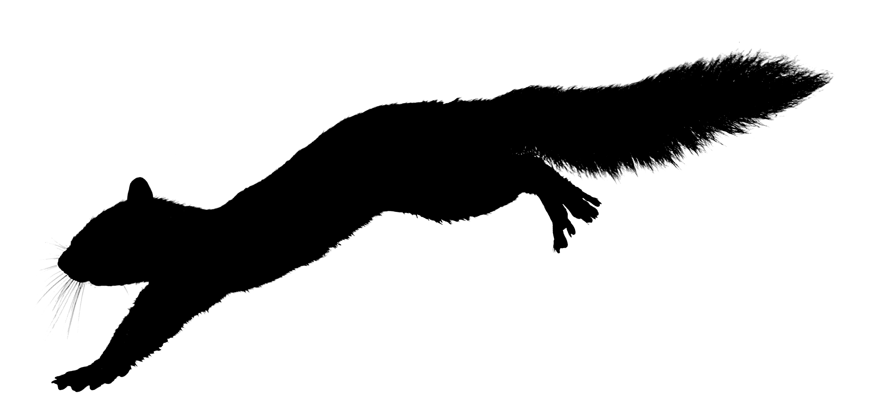 Squirrel Running Clipart.
