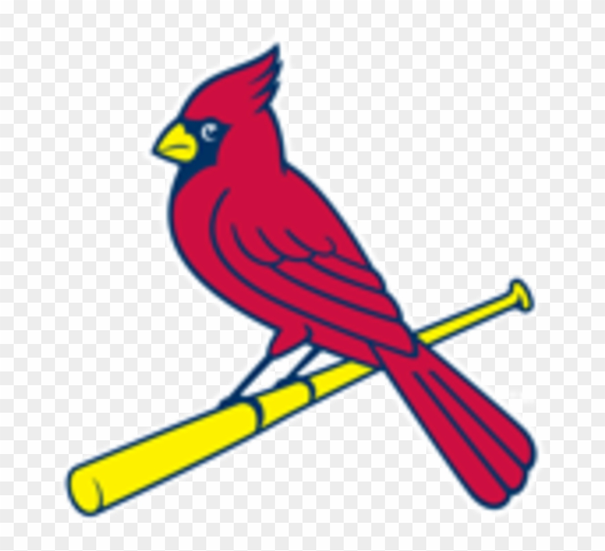 St Louis Cardinals Bird On Bat Clipart (#1093480).