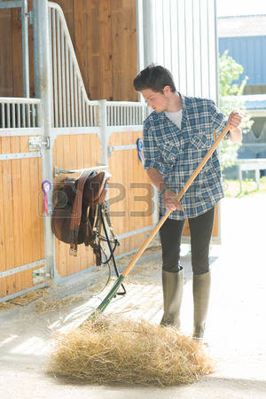 Stable Images & Stock Pictures. Royalty Free Stable Photos And.