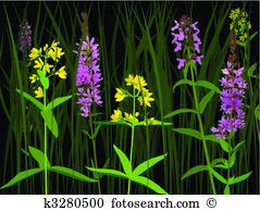 Stachys Clipart and Illustration. 4 stachys clip art vector EPS.