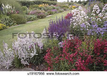 Stock Images of Pink penstemon with blue salvia and grey stachys.