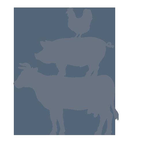 Cattle Pig Livestock Farm Agriculture.