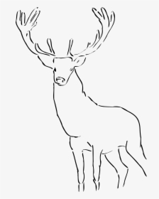 Stag Clipart Drawn.