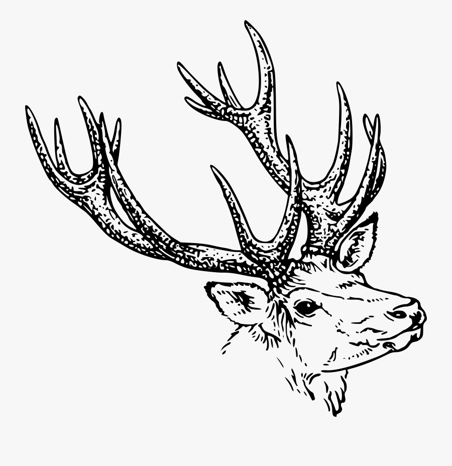 Stag Head.