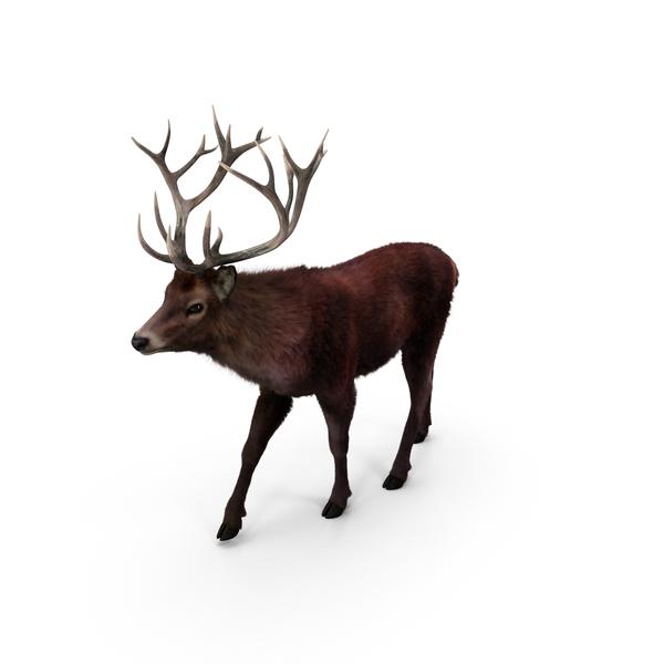 Red Deer Stag PNG Images & PSDs for Download.