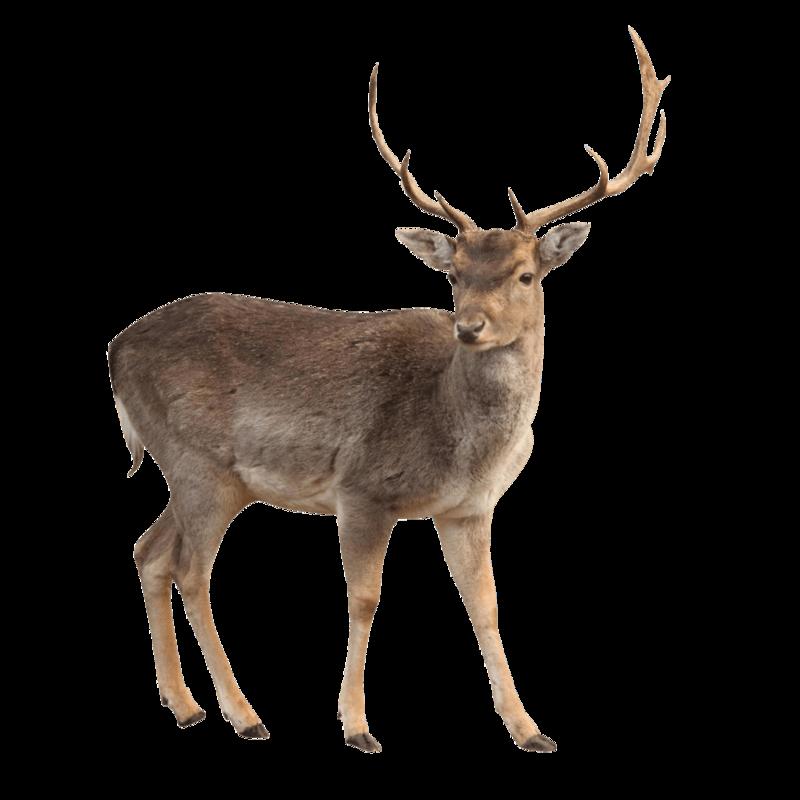 Download Free png deer.
