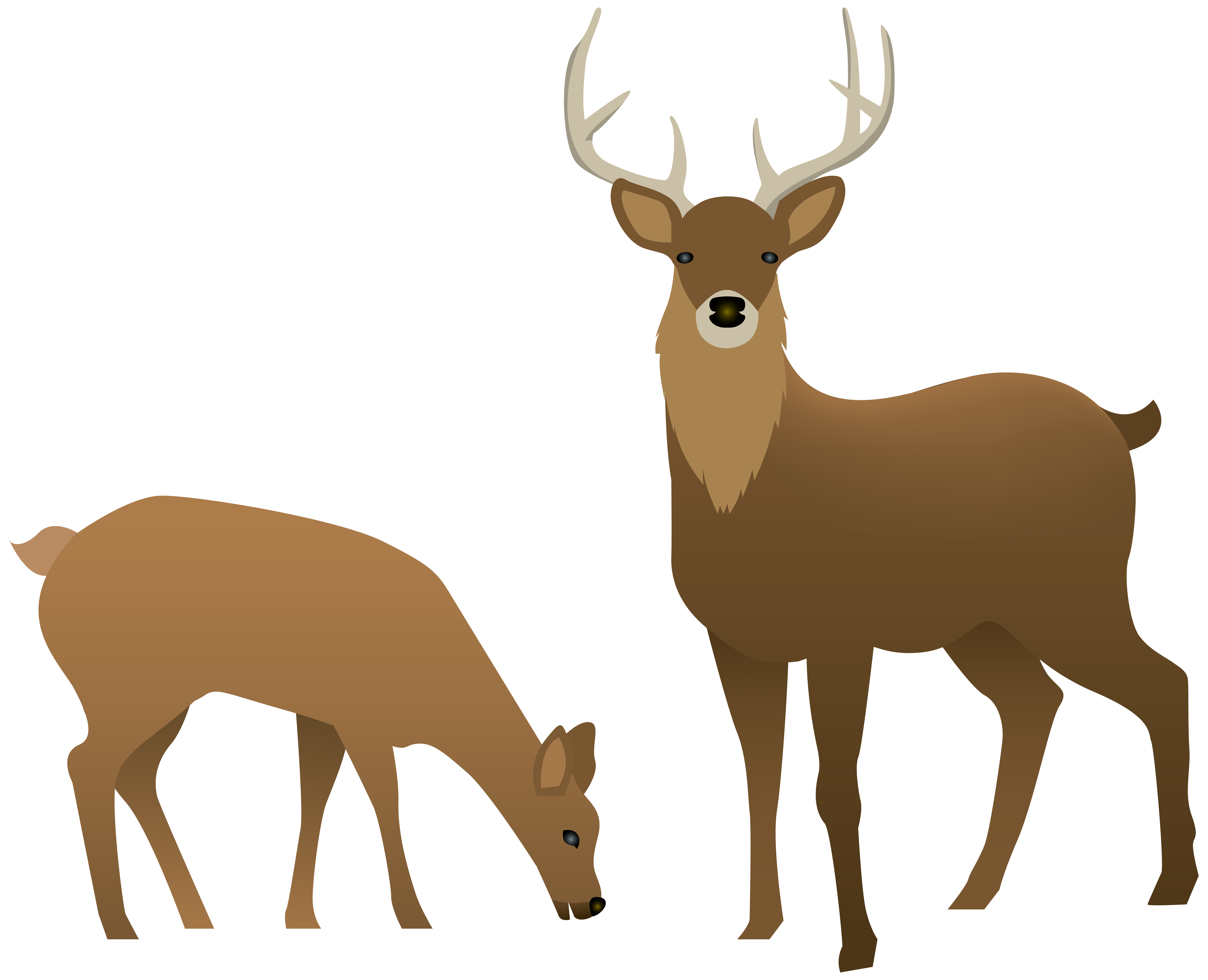 Stag and Doe Transparent PNG Image.
