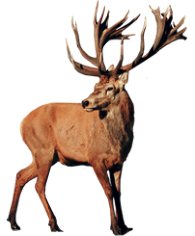 Download Free png Stag png 3 » PNG Image.